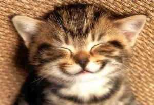 https://ikeepitclassy.files.wordpress.com/2011/09/happy-cat.jpeg?w=300